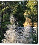 Travertine Tree Acrylic Print
