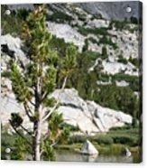 Treasure Lake Pine Acrylic Print