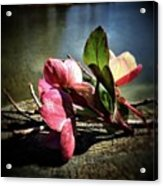 Treasures From The Garden Acrylic Print