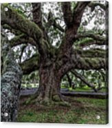 Treaty Oak 12 14 2015 027 Acrylic Print