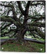 Treaty Oak 12 14 2015 029 Acrylic Print
