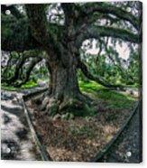 Treaty Oak 12-14-2015 056 Acrylic Print