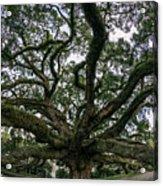 Treaty Oak 12-15-2015 051 Acrylic Print