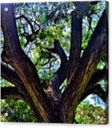 Tree 105 Acrylic Print