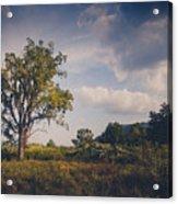 Tree 23 Acrylic Print