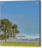 Tree Above The Clouds Acrylic Print