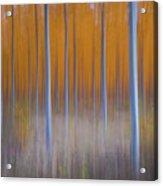 Tree Abstract Acrylic Print
