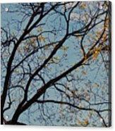 Tree Against The Sky Acrylic Print