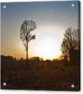 Tree Against The Sun II Acrylic Print