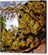 Tree Along Zion Riverside Walk Acrylic Print