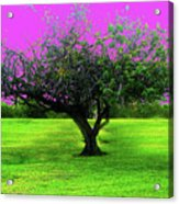 Tree And Color Acrylic Print