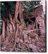 Tree And Ruins In Cozumel Acrylic Print