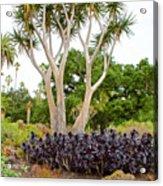 Tree And Succulents In Huntington Desert Gardens In San Marino-california Acrylic Print