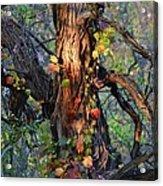 Tree And Vine Acrylic Print