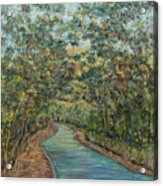 Tree Arched Road Acrylic Print
