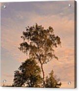 Tree At Dusk On Suomenlinna Island Acrylic Print