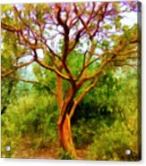 Tree At Kew Gardens Acrylic Print