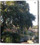 Tree At Mission Carmel Acrylic Print
