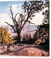 Tree At Moran Point Acrylic Print