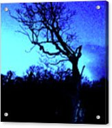 Tree At Night Acrylic Print