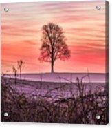 Tree At Sunrise Eaton Rapids Acrylic Print