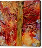 Tree At Sunset Acrylic Print