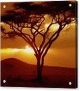 Tree At Sunset. L B Acrylic Print