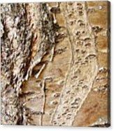Tree Bark 9 Acrylic Print
