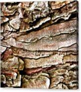 Tree Bark Abstract Acrylic Print