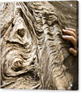 Tree Bark And Hand Acrylic Print