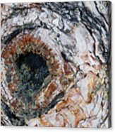 Tree Bark Acrylic Print