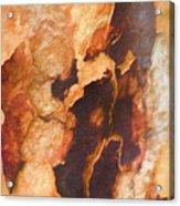 Tree Bark Collection # 50 Acrylic Print