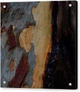 Tree Bark Collection # 52 Acrylic Print