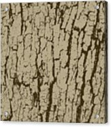 Tree Bark Texture Brown Acrylic Print