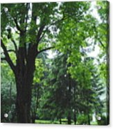 Tree Bench Acrylic Print