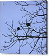 Tree Birds And Sky Acrylic Print by Richard Mitchell