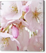 Tree Blossoms Art Prints Canvas Pink Spring Blossoms Baslee Troutman Acrylic Print