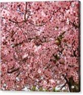Tree Blossoms Pink Blossoms Art Prints Giclee Flower Landscape Artwork Acrylic Print