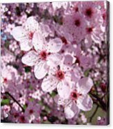 Tree Blossoms Pink Spring Flowering Trees Baslee Troutman Acrylic Print