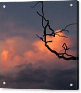 Tree Branch At Sunset Acrylic Print