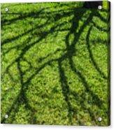 Tree Branch Shadow Acrylic Print