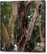 Tree Branch Texture 1 Acrylic Print