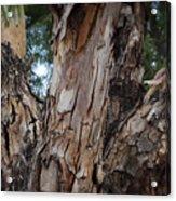 Tree Branch Texture 3 Acrylic Print