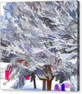 Tree Branches Covered By Snow  Acrylic Print