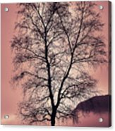 Tree Branches Acrylic Print