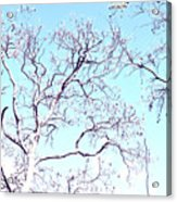 Tree Branches Reaching For Heaven 2 Acrylic Print