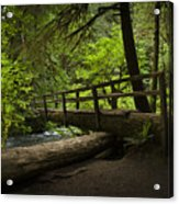 Tree Bridge Acrylic Print