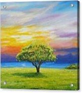 Tree By The Beach Acrylic Print