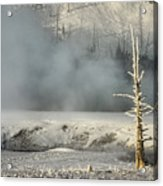 Tree By The Thermal - Yellowstone Acrylic Print