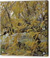 Tree By The Water Acrylic Print